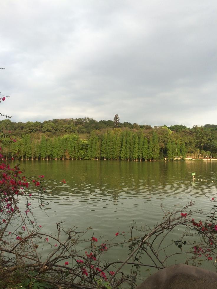 Chinese water cypress